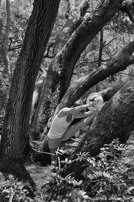Yoga Trees